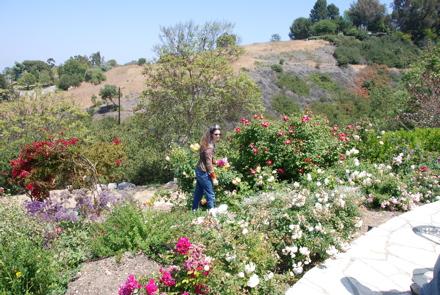 in-the-field-of-flowers.jpg